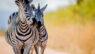 Kruger National Park, South Africa.