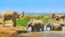elephants, eastern cape, south africa