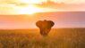Elephant, Masai Mara, Kenya