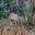 Sausage Tree Camp Kudu