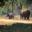 Elephants of Kanha and Bhandhavgarh National Parks