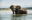 GreatPlains-Tembo-Plains-36