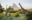 Ol Jogi Kenya 1-giraffe